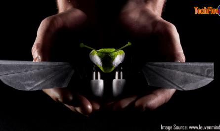 Robo Firefly on hand
