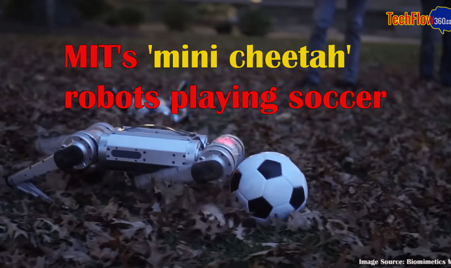 MIT's 'mini cheetah' robots playing soccer and winning